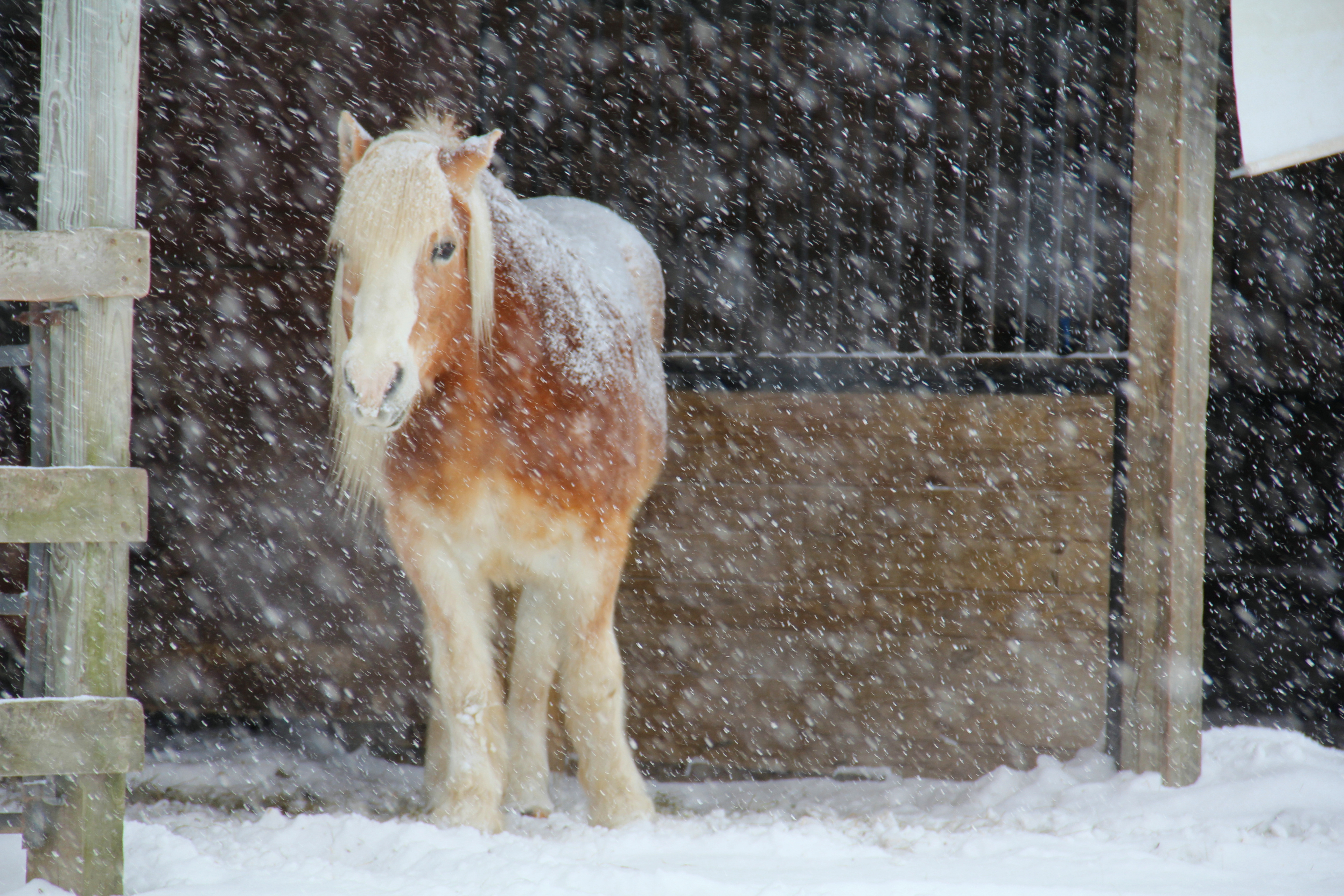 snowrocky